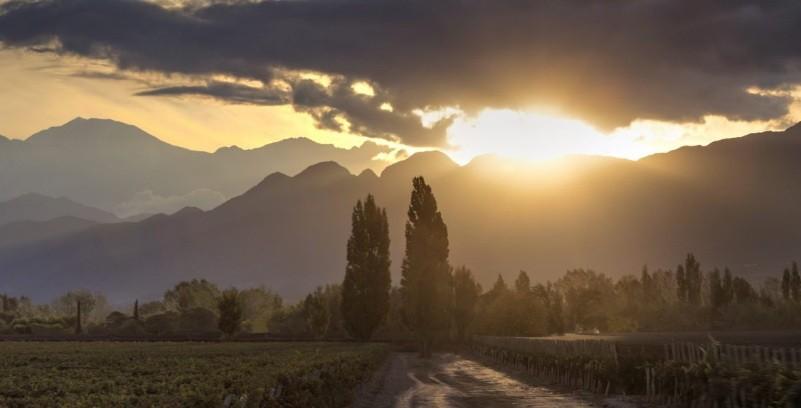 Bodega Alta Vista Wines